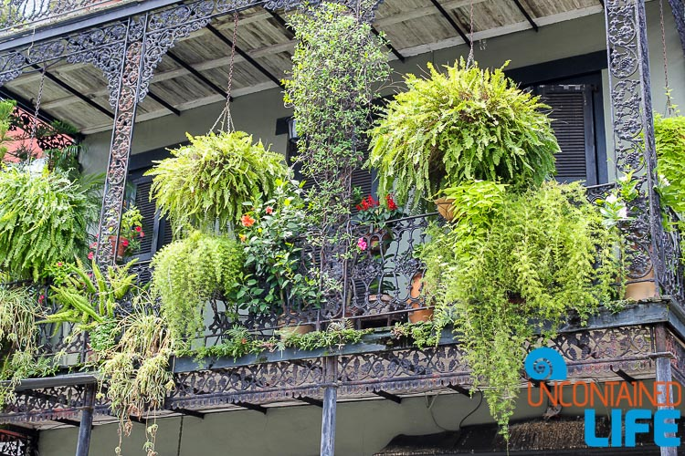 Hanging Gardens French Quarter New Orleans