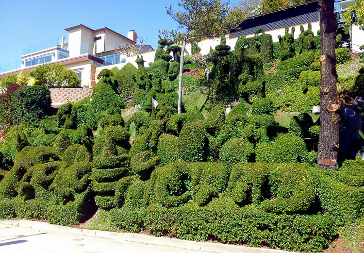 Topiary Bushes San Diego CA Cowboy