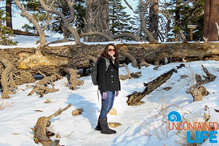 Hillary Snow Fallen Tree