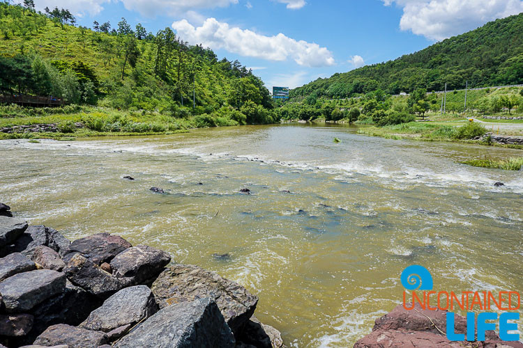 River, Off the Beaten Path in South Korea, Uncontained Life