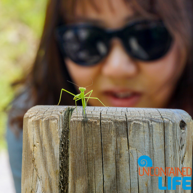 Praying Mantis, Off the Beaten Path in South Korea, Uncontained Life
