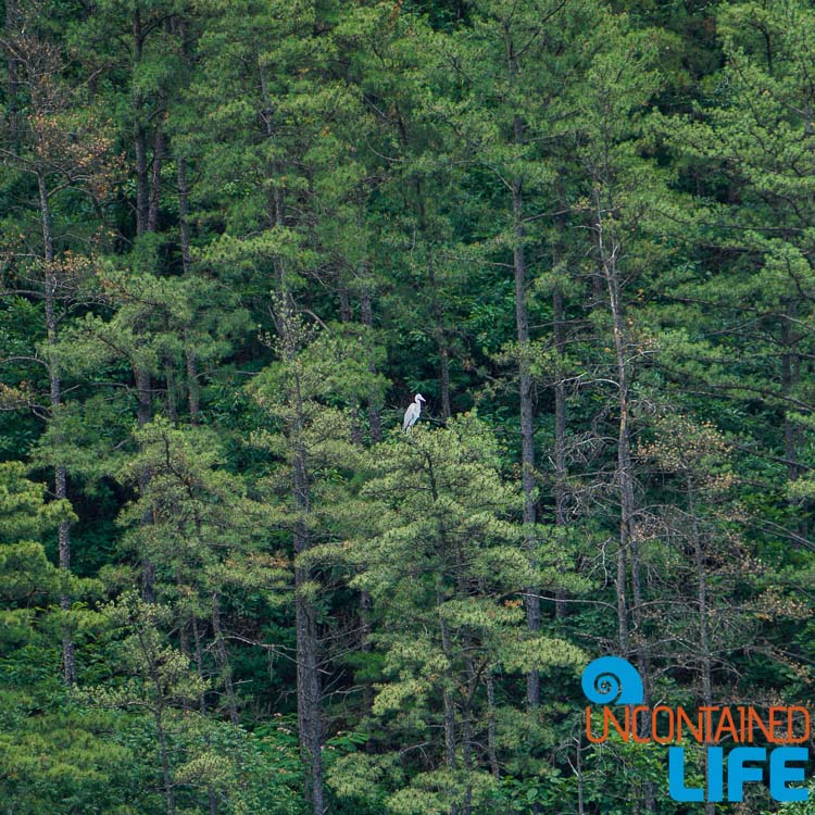 Bird in Trees, Off the Beaten Path in South Korea, Uncontained Life