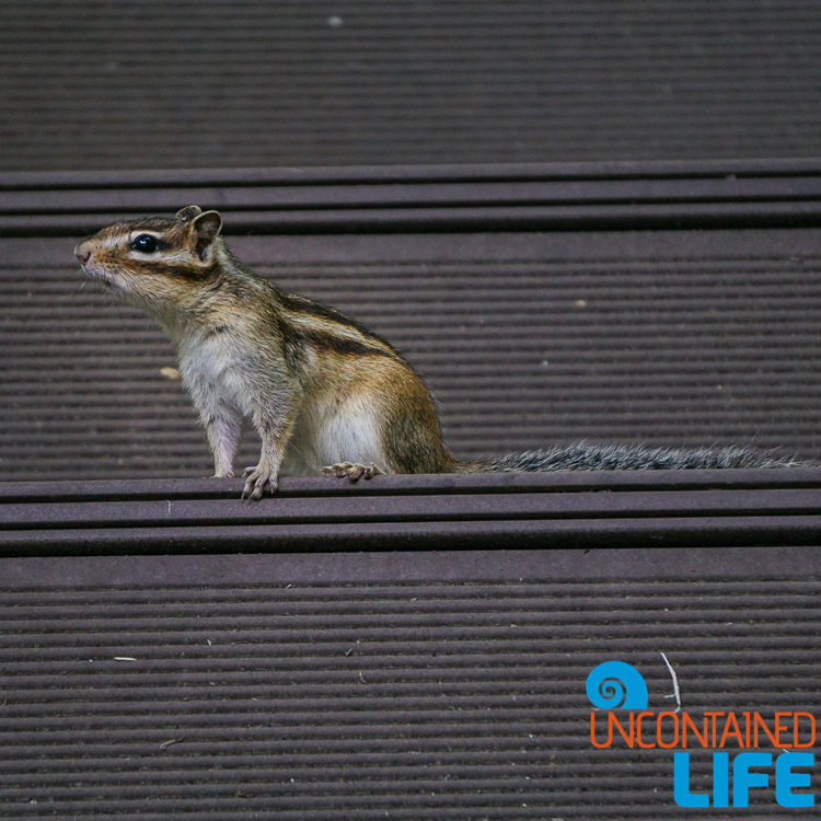 Squirrel, Off the Beaten Path in South Korea, Uncontained Life