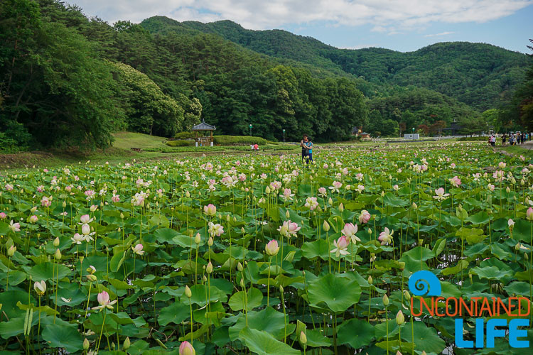 Lotus Park South Korea