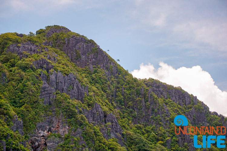 El Nido Forests