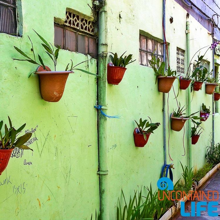 Jakarta Flower Pot Wall