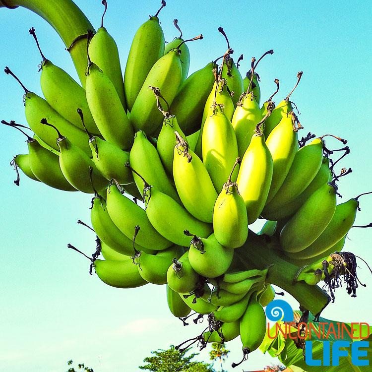 Bali Bananas