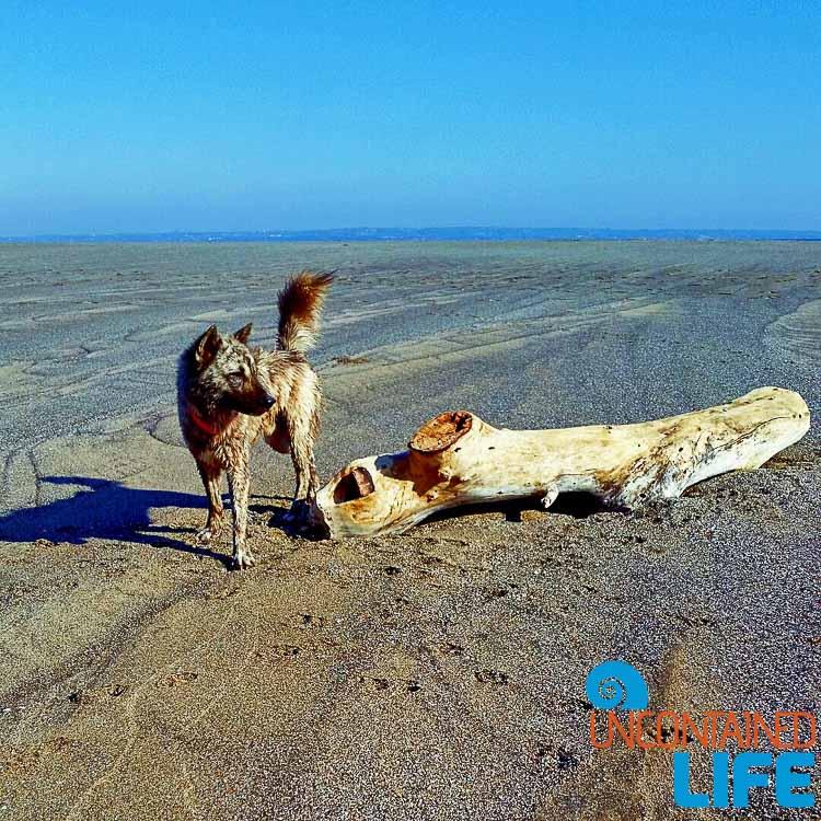 Echo Beach Bali dog