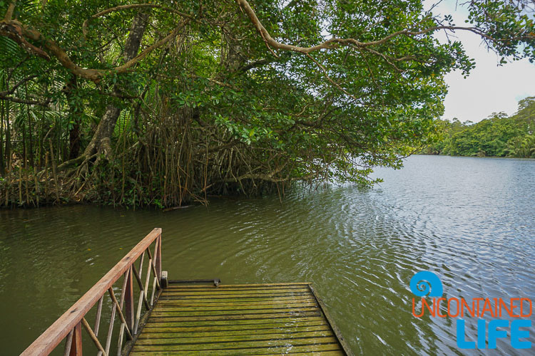 Mangroves, Mangrove Resort, Langogan, Philippines, Uncontained Life