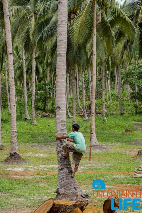 Coconut Climber, Mangrove Resort in Langogan, Palawan, Philippines, Uncontained Life