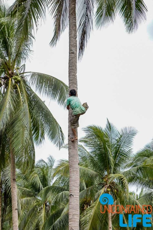 Climb Coconut Tree, Mangrove Resort in Langogan, Palawan, Philippines, Uncontained Life