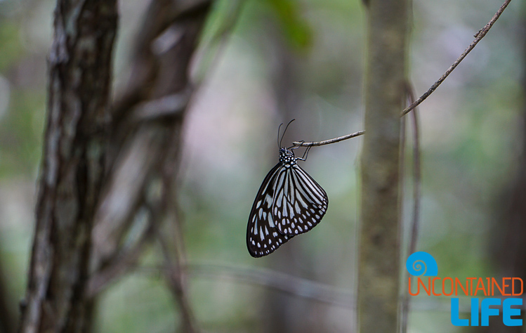 Butterfly, Mangrove Resort, Langogan, Philippines, Uncontained Life