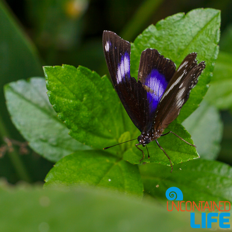 Butterfly, Mangrove Resort in Langogan, Palawan, Philippines, Uncontained Life