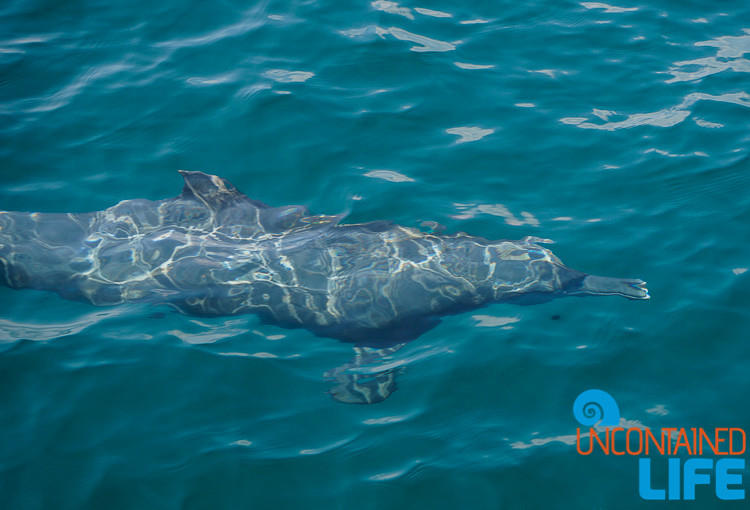 Dolphin Underwater, Blue World Safari, Phi Phi Islands, Phuket, Thailand, Uncontained Life
