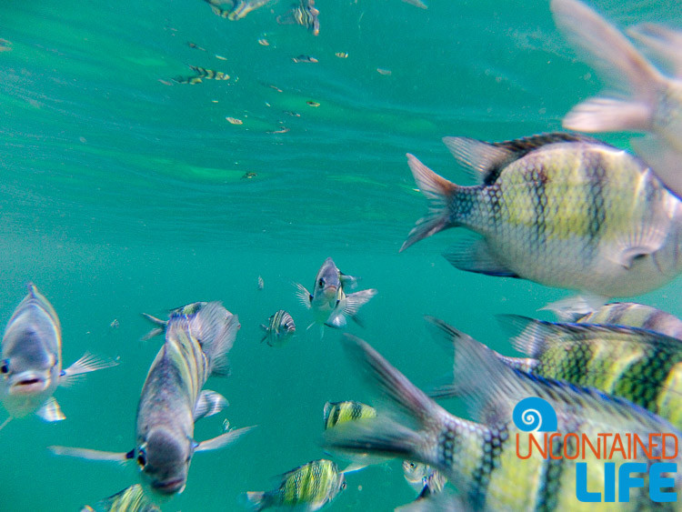 Fish, GoPro, Snorkeling, Blue World Safari, Phi Phi Islands, Phuket, Thailand, Uncontained Life
