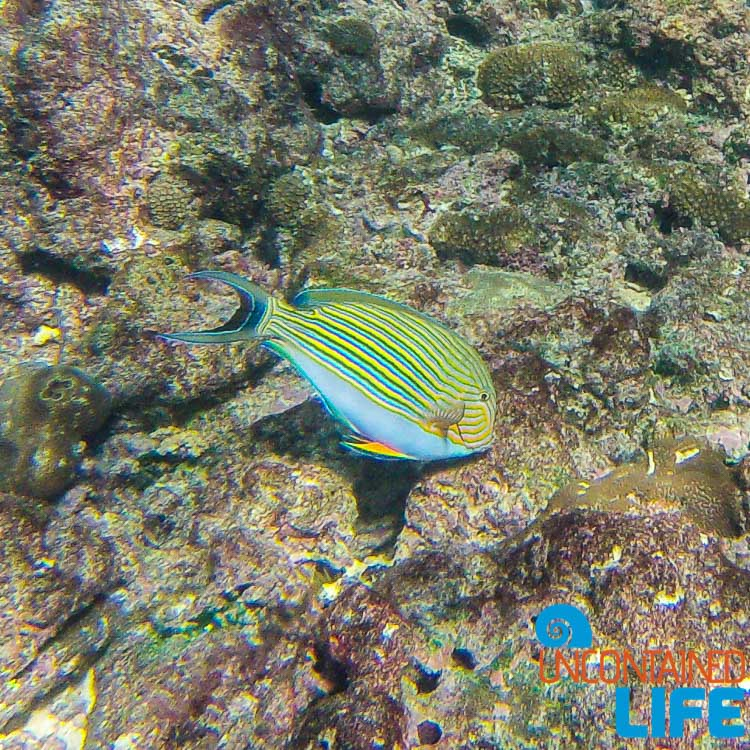 Fish, Snorkeling, GoPro, Blue World Safari, Phi Phi Islands, Phuket, Thailand, Uncontained Life