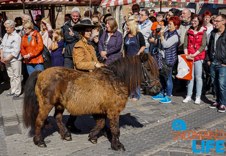 Pony, Parade, Altstadfest, Nuremberg, Germany, Uncontained Life