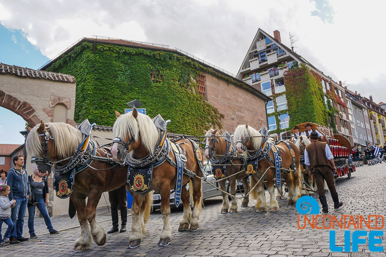 Horses, Altstadtfest, Nuremberg, Germany, Uncontained Life