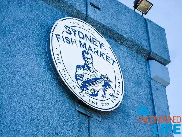 Sydney Fish Market, Inexpensive Activities in Sydney, Australia, Uncontained Life