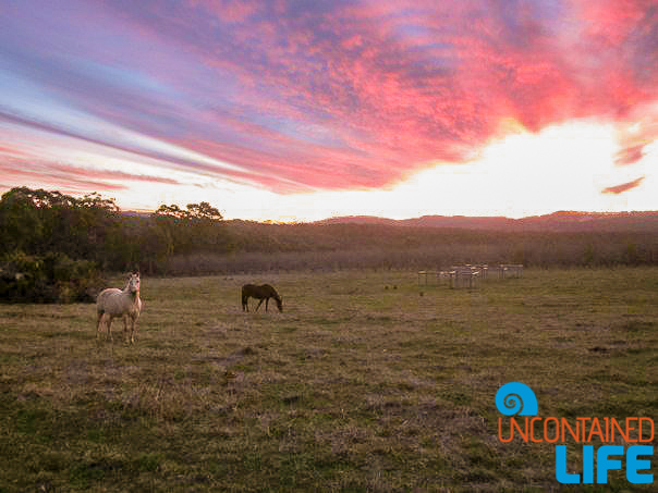 Horseback Riding, Blue Mountains, New South Wales, Active Adventures, Australia, Uncontained Life