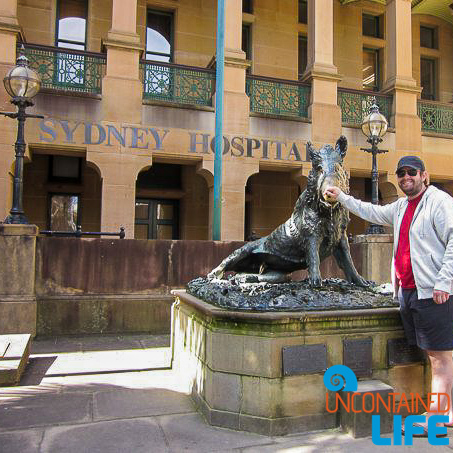 The Florentine Boar, Inexpensive Activities in Sydney, Australia, Uncontained Life