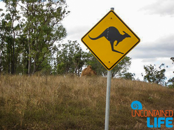Kangaroo, Signs, Queensland Australia