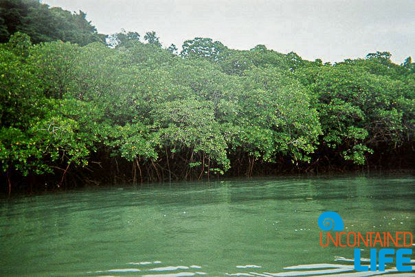 Mangrove Forest, Kayaking, Active Adventures, Australia, Uncontained Life