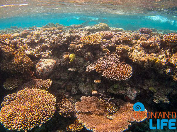 Great Barrier Reef, Snorkeling, Active Adventures, Australia, Uncontained Life