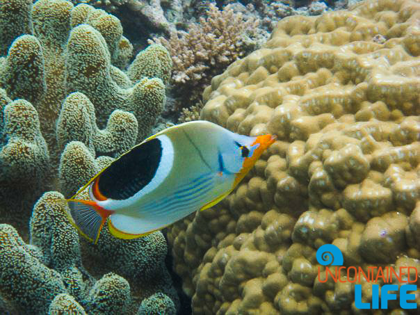 Snorkeling, Great Barrier Reef, Active Adventures, Australia, Uncontained Life