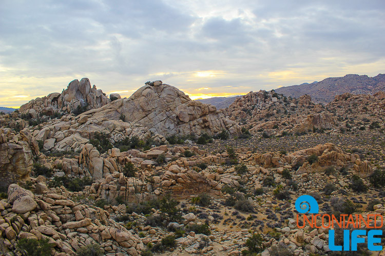 Joshua Tree, California, USA, January travel destinations, Uncontained Life