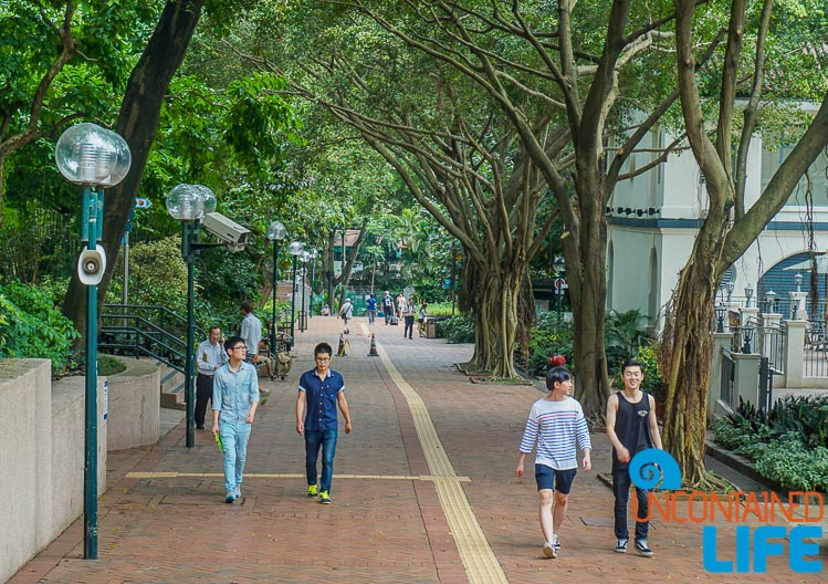 Public Park, things to avoid when visiting Hong Kong, Uncontained Life