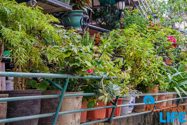 Flower Pots, Day trip to Cheung Chau, Hong Kong, Uncontained Life