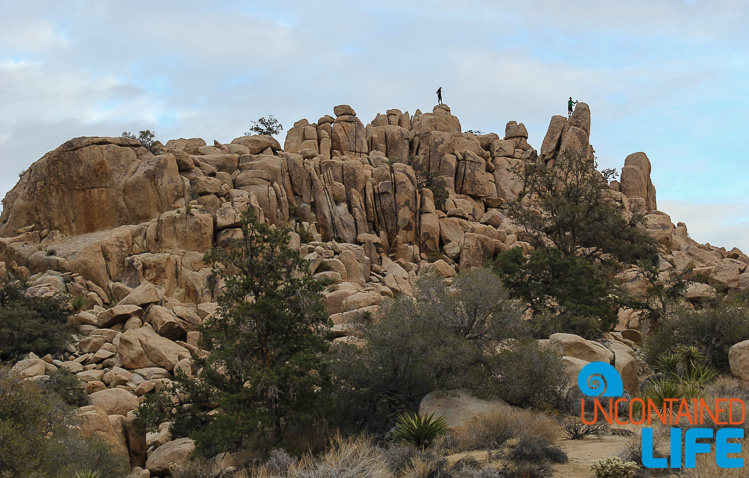 USA, Joshua Tree, Highlights of 2015, Uncontained Life