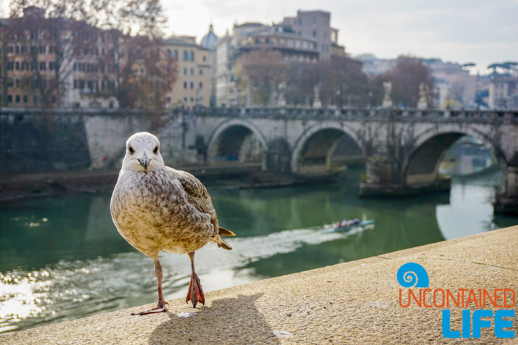 seagull, italy, bridge, bike tour of Rome, Uncontained Life