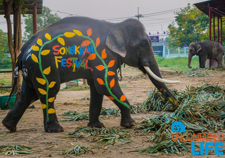 Elephant, Celebrating Songkran in Chiang Mai, Thailand, Uncontained Life
