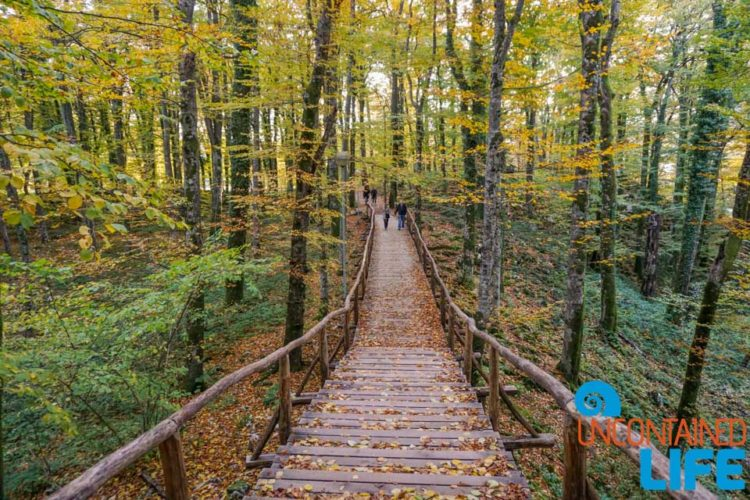 Trees, Visit Plitvice Lakes National Park, Croatia, Uncontained Life