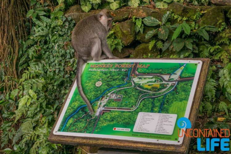 Map, Sacred Monkey Forest Sanctuary, Ubud, Bali, Indonesia, Uncontained Life