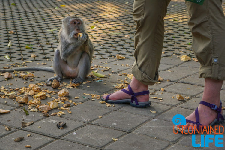 Teva Sandals, Sacred Monkey Forest Sanctuary, Ubud, Bali, Indonesia, Uncontained Life