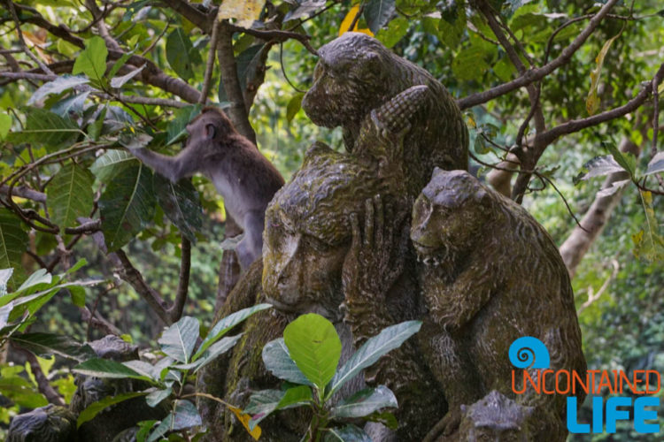 Sacred Monkey Forest Sanctuary, Ubud, Bali, Indonesia, Uncontained Life