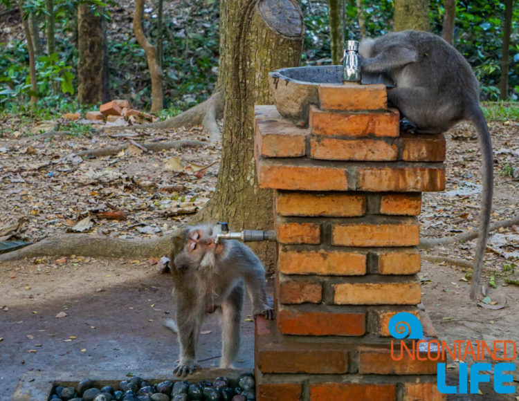 Drinking Fountain, Sacred Monkey Forest Sanctuary, Ubud, Bali, Indonesia, Uncontained Life
