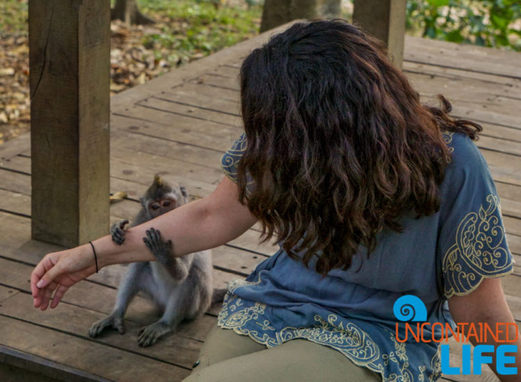 Monkey Bite, Sacred Monkey Forest Sanctuary, Ubud, Bali, Indonesia, Uncontained Life