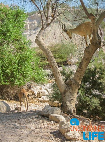 Ibek, Masada Snake Path, Israel, Uncontained Life