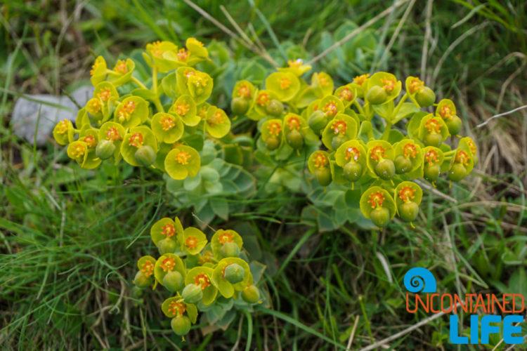 Wildflowers, Visit Lukomir, Bosnia and Herzegovina, Uncontained Life