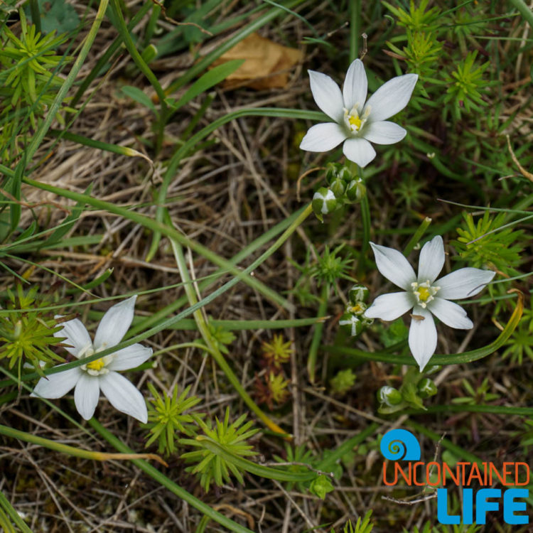 Wildflowers, Visit Lukomir, Bosnia and Herzegovina, Uncontained Life