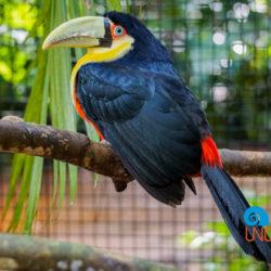 Parque das Aves, Iguassu, Brazil, Uncontained Life