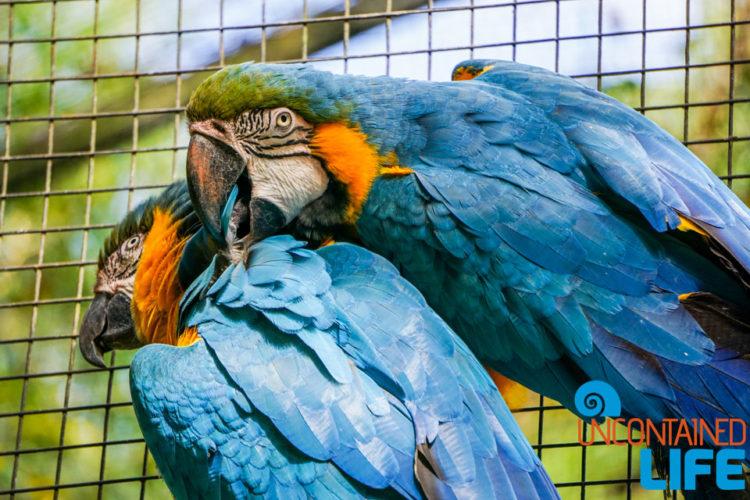 Parque das Aves, Iguassu, Brazil, Birds, Uncontained Life