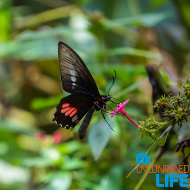 Parque das Aves, Iguassu, Brazil, Butterfly, Uncontained Life