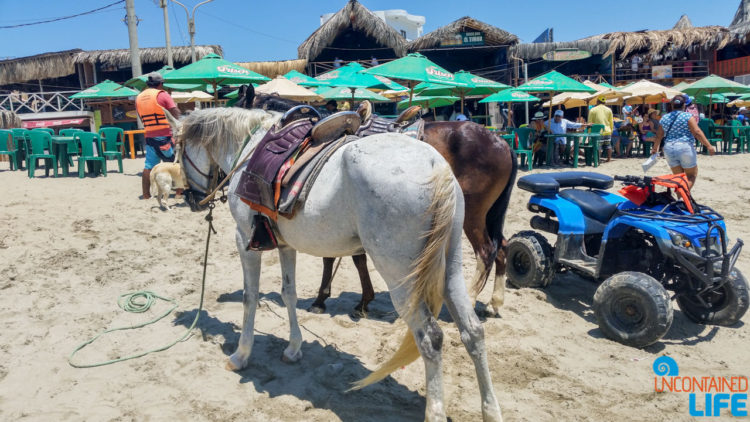 Tourist Beach, Horses, Visiting Mancora, Peru, Uncontained Life