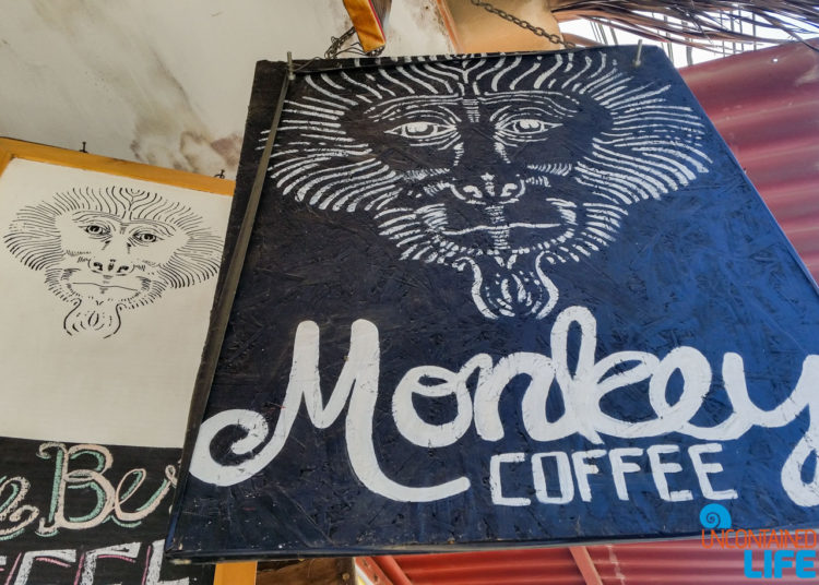 Monkey Coffee, Visiting Mancora, Peru, Uncontained Life