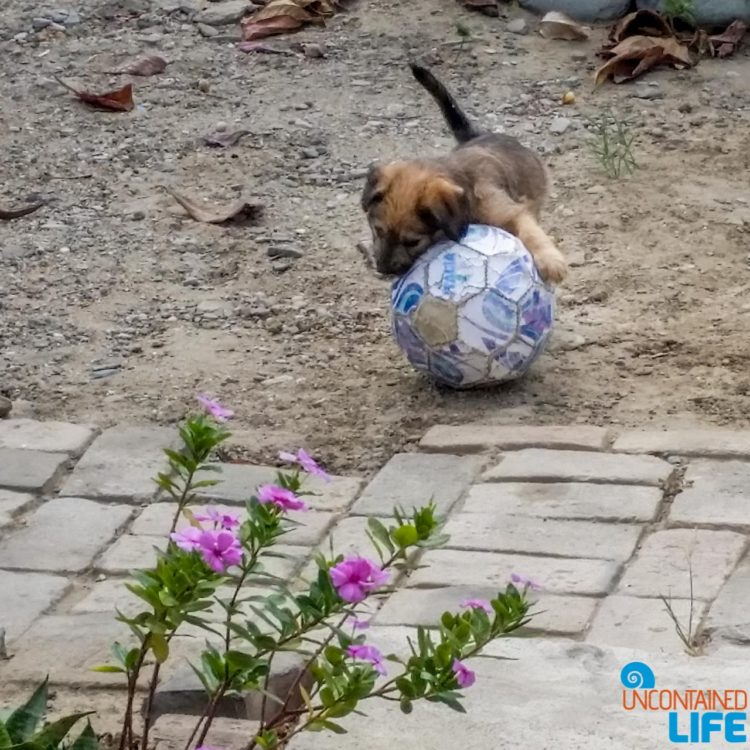 Puppy, Soccer, Visiting Mancora, Peru, Uncontained Life